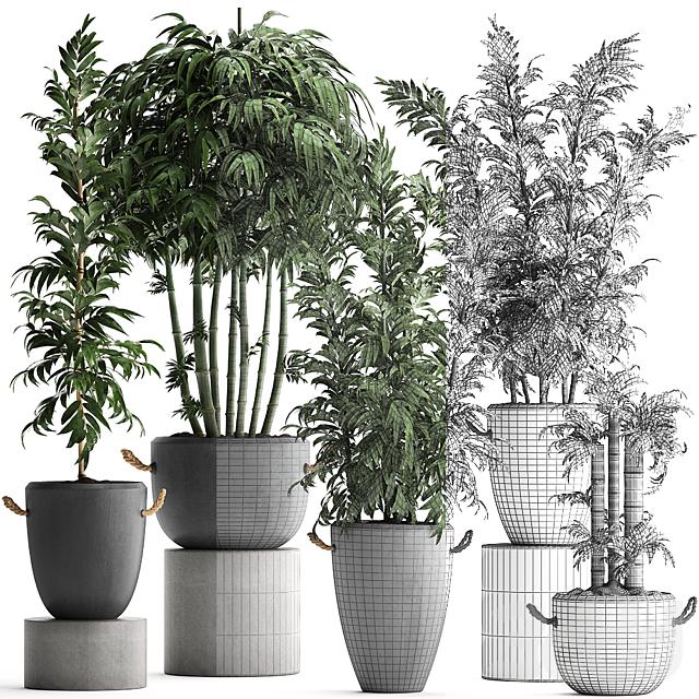 Коллекция растений 390.