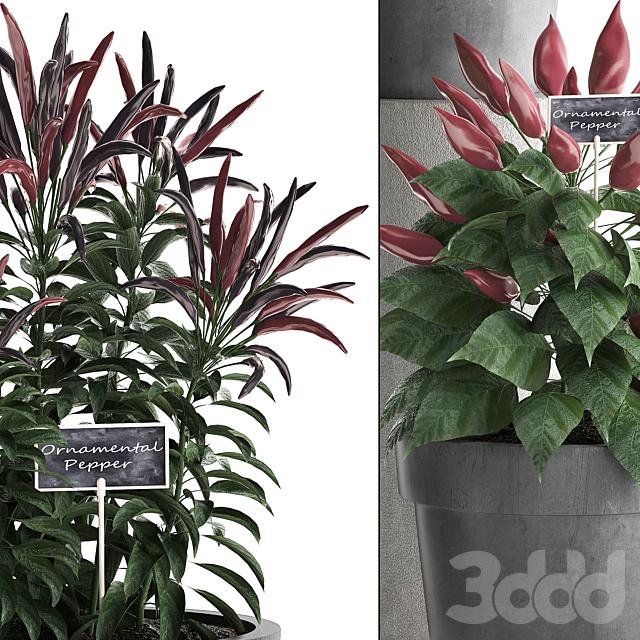 Коллекция растений 391. Зелень для кухни.