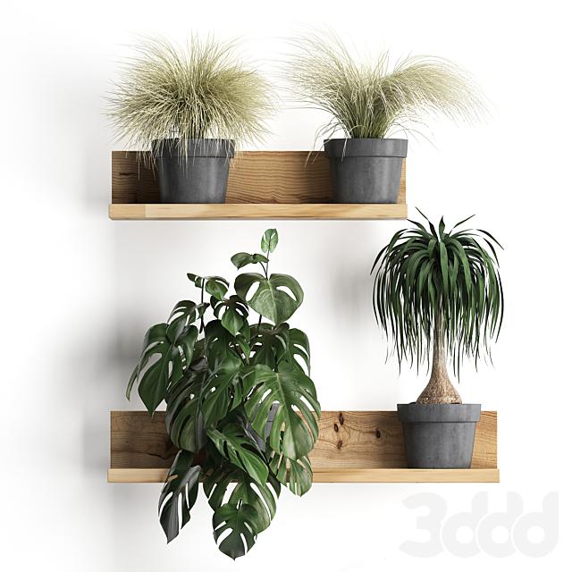 Вертикальное озеленение. 48