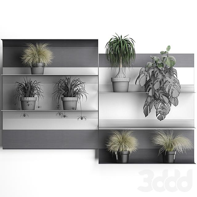 Вертикальное озеленение. 50