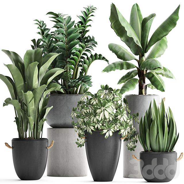 Коллекция растений 392.