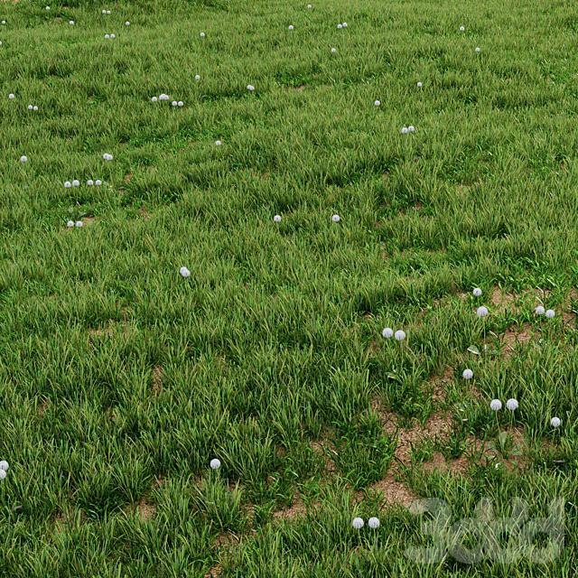 Трава для озеленения экстерьера 02