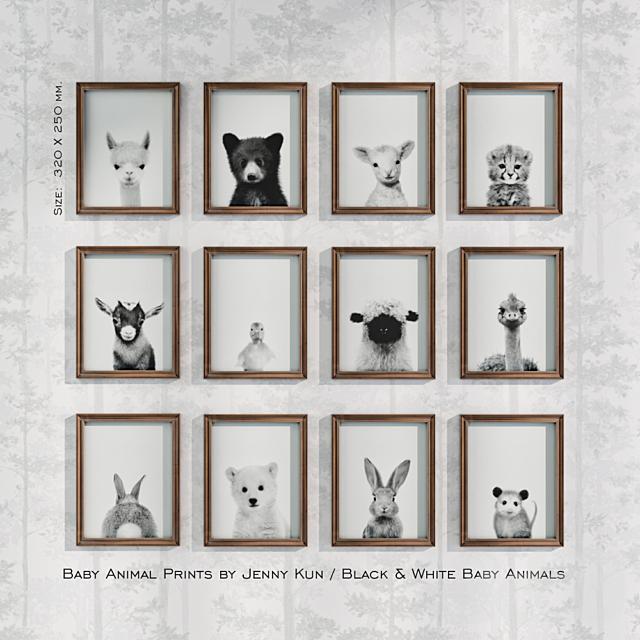 Baby Animal Prints by Jenny Kun / Black & White Baby Animals. Size: 320х250mm.