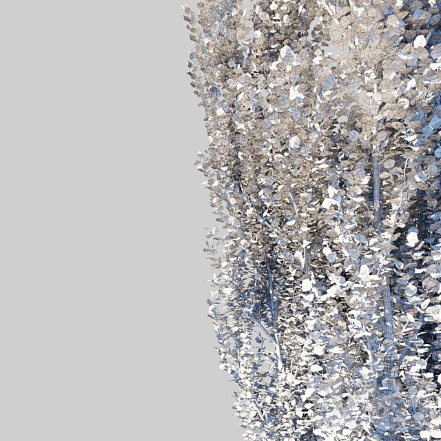 Тополь пирамидальный/Populus pyramidalis