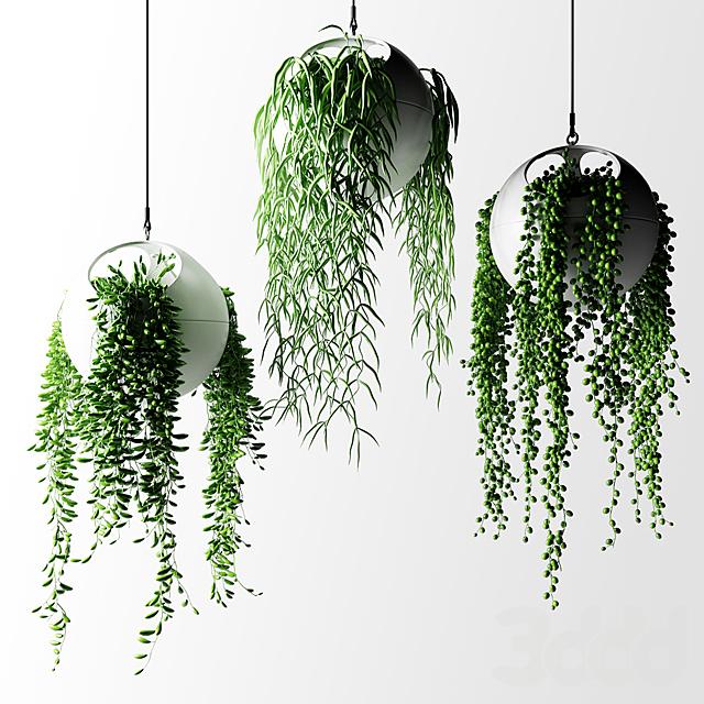 Cвисающие растения в шарах кашпо | Hanged Plants in spherical hanging planters