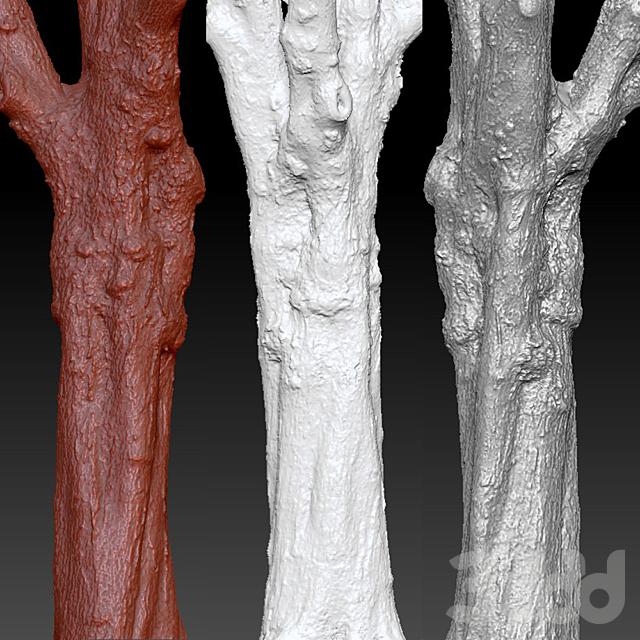 Maple | Maple-tree # 1