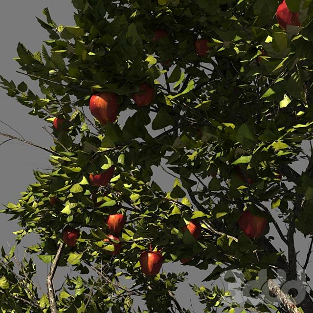 Яблоня_AppleTree