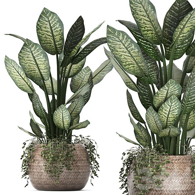 Коллекция растений 418.