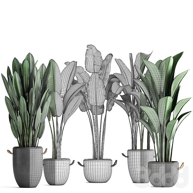 Коллекция растений 419.