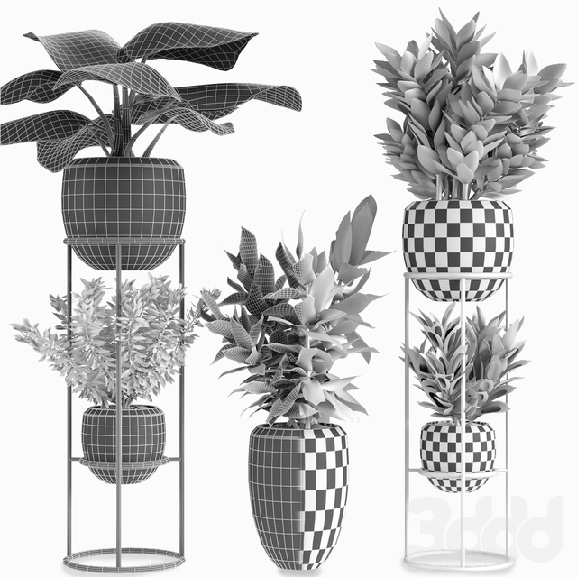 Collections Plants 07