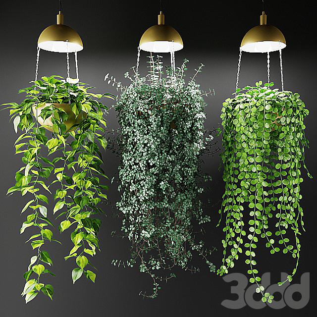 Ампельные растения в кашпо со светильниками