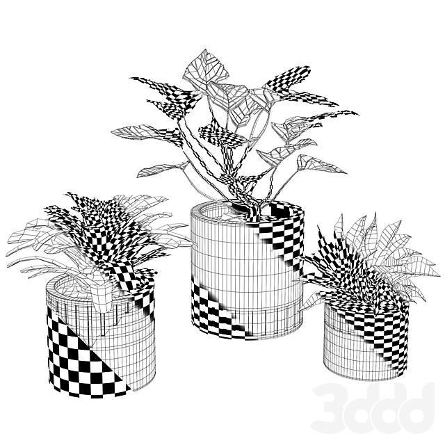 Набор растений w02