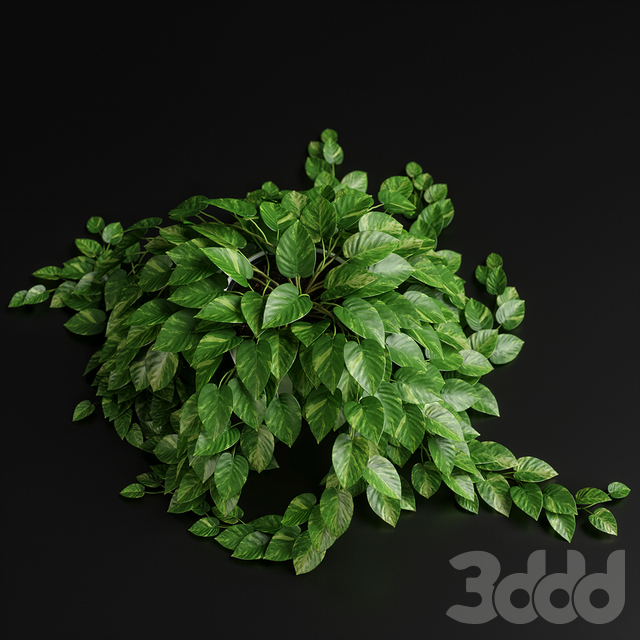 plants set 12