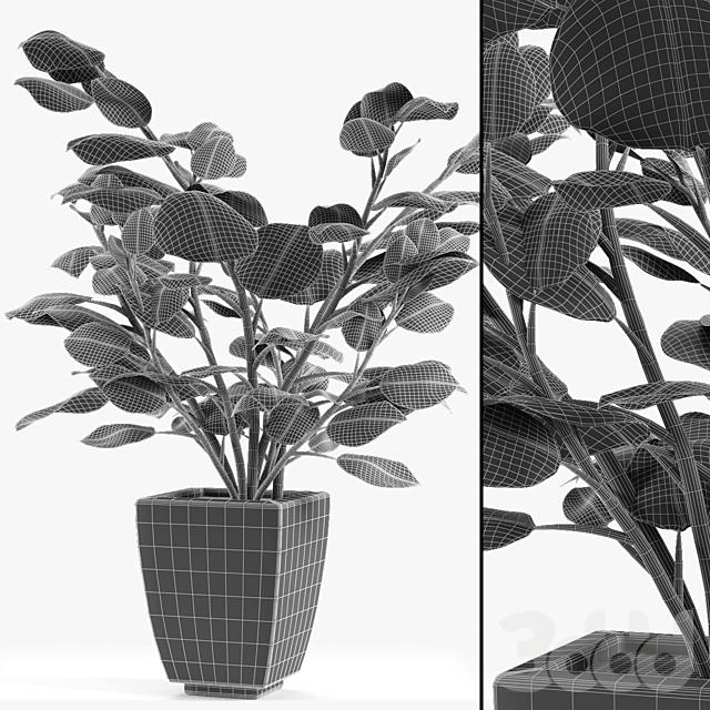 Realistic Plant Garden