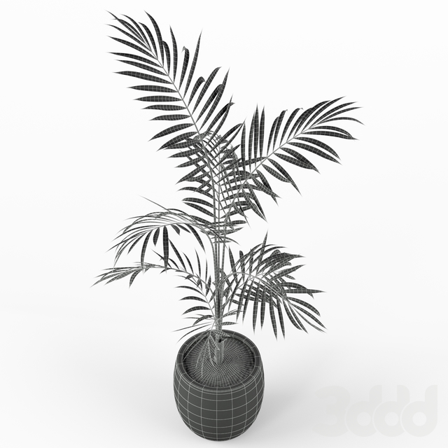 Plants collection 215