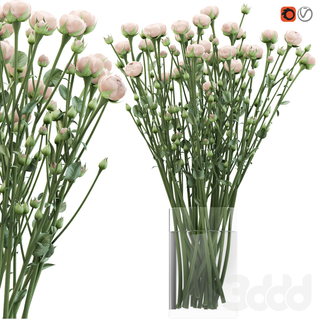 Bouquet of small beige shrub roses in a vase with water