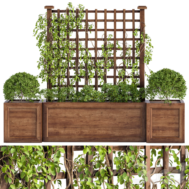 Outdoor Plants with ivy and fence