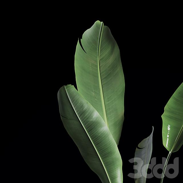 Indoor Plants Set 04