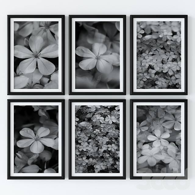 Постеры - цветы