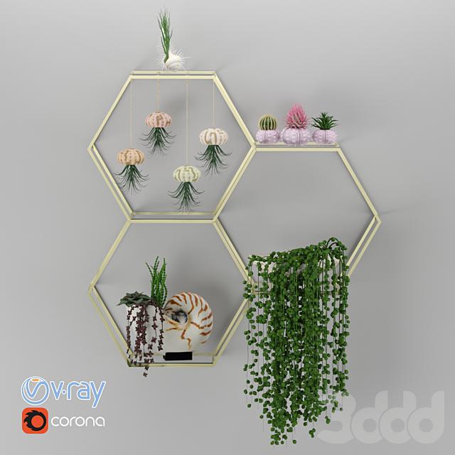 House Plants