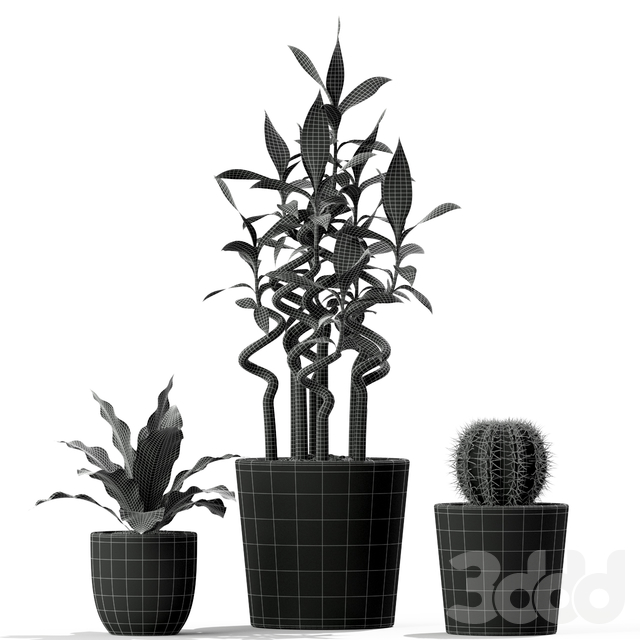 Plants collection 231