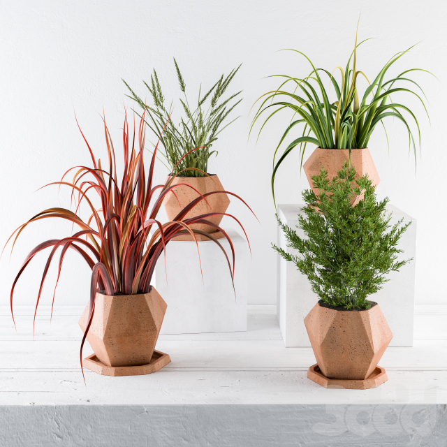 Plants and Pot Decor