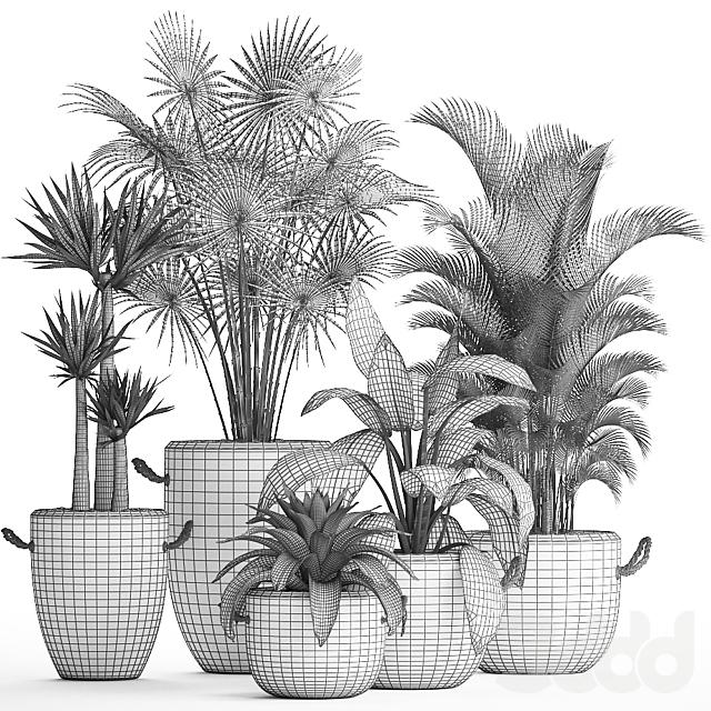 Коллекция растений 436.