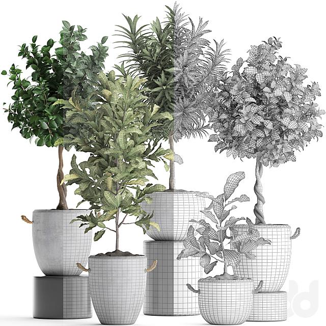 Коллекция растений 437.