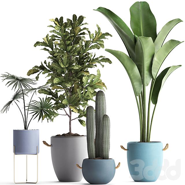 Коллекция растений 439.