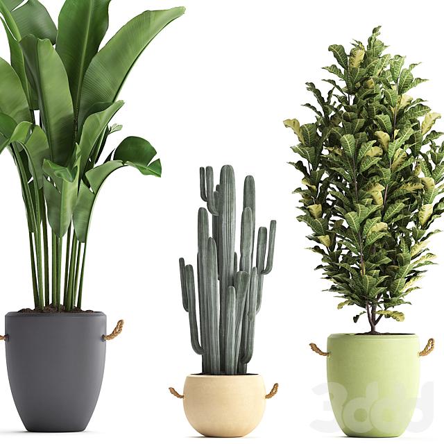Коллекция растений 440.