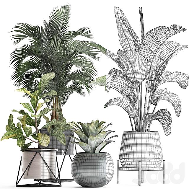 Коллекция растений 441.