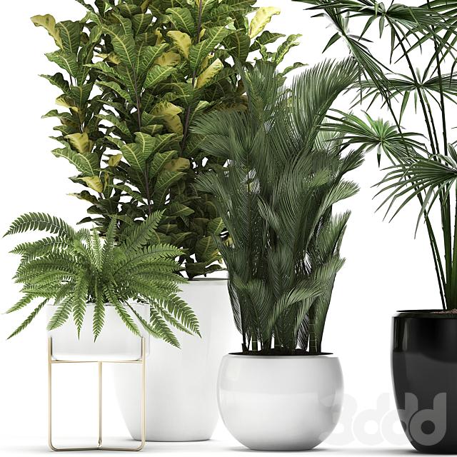 Коллекция растений 443.