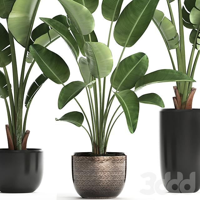 Коллекция растений 444.