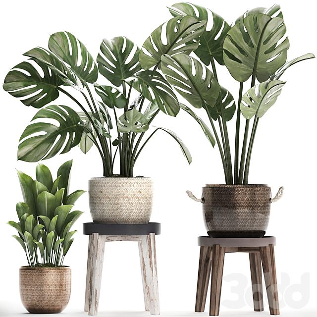 Коллекция растений 447.