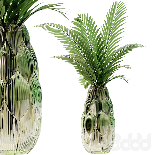 Exotic glass vase with Howea plants