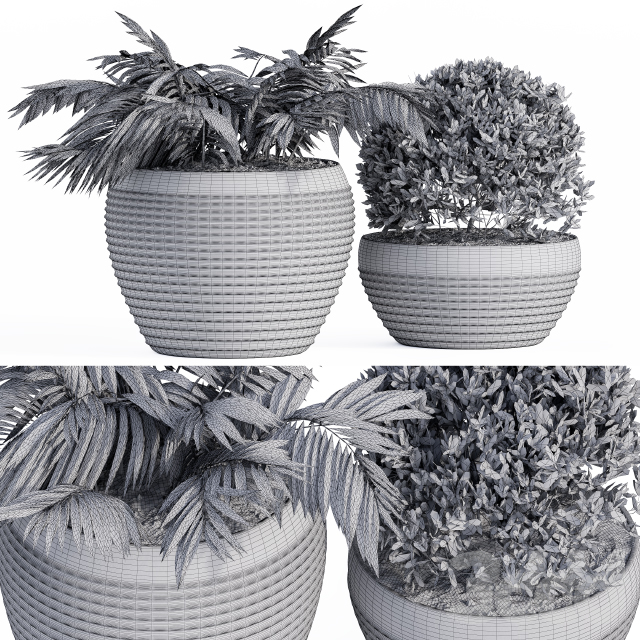 Outdoor Plants Black Pot