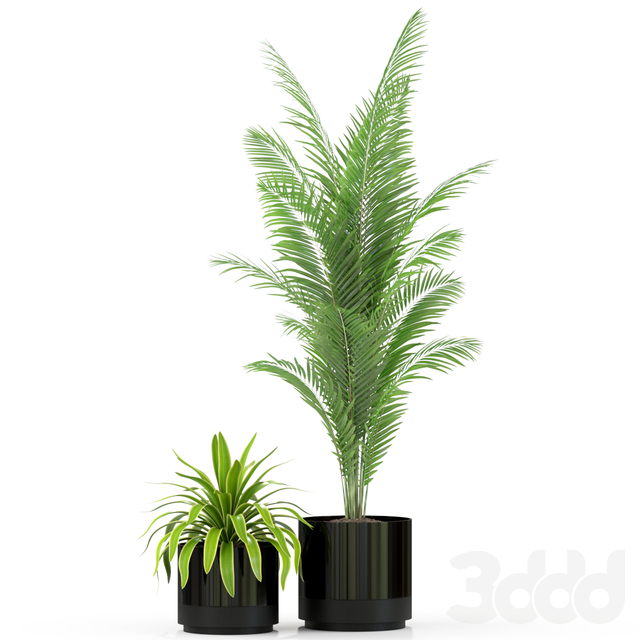 Plants collection 240