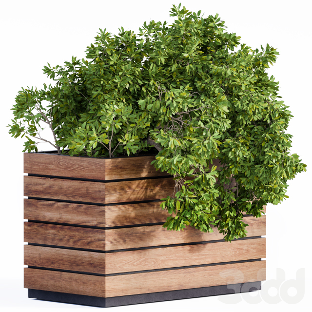 Plant Box Green & Wood
