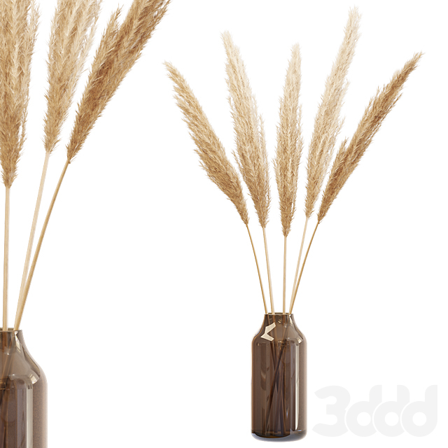 Dry branches of pampas grass in glass vase 4