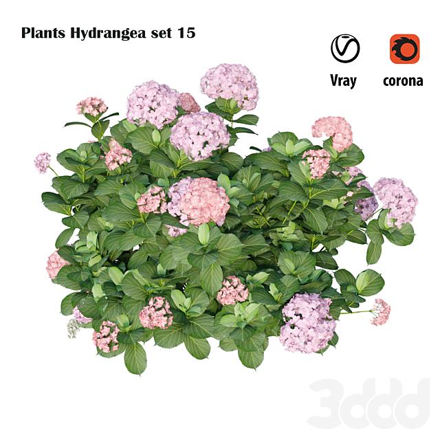 Plants Hydrangea set 15