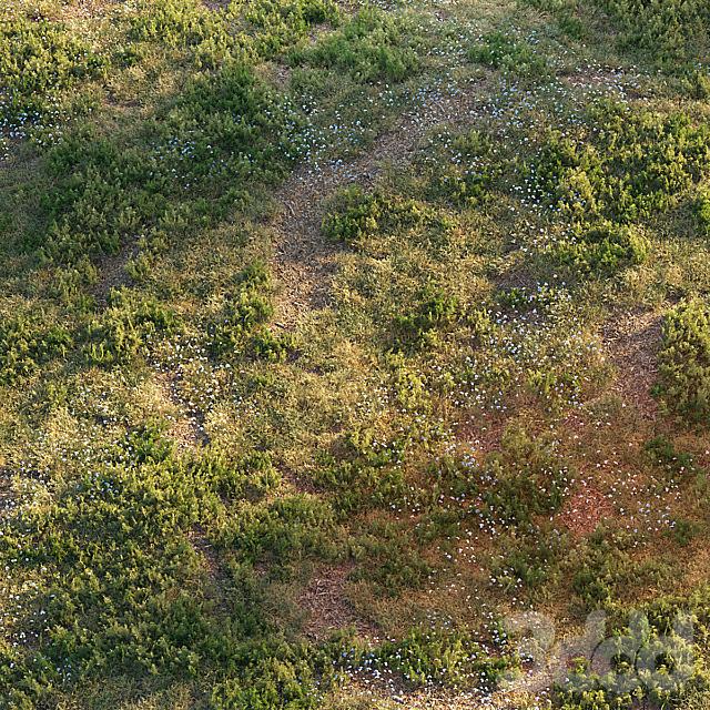 Лесная трава