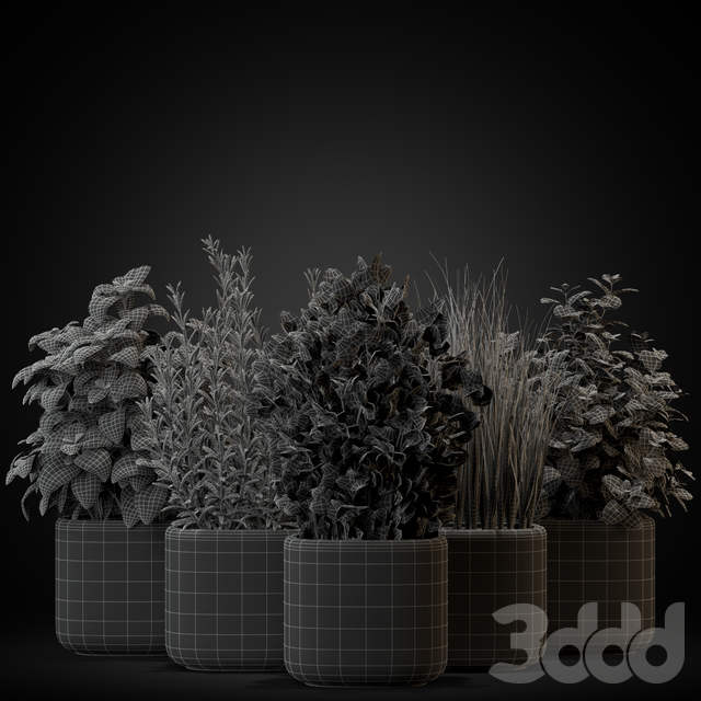 Plants collection 261