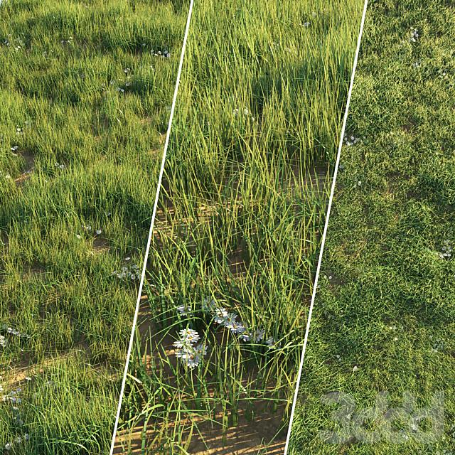 Лужайка с нестриженой травой