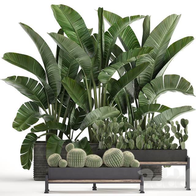 Коллекция растений 458.
