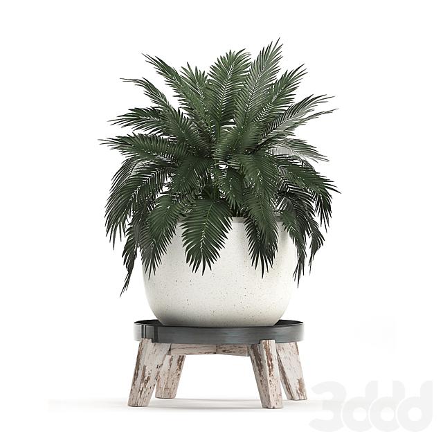 Коллекция растений 459.