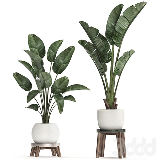 Коллекция растений 461.
