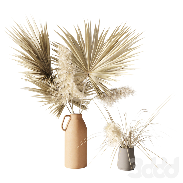 Dry palms and pampas