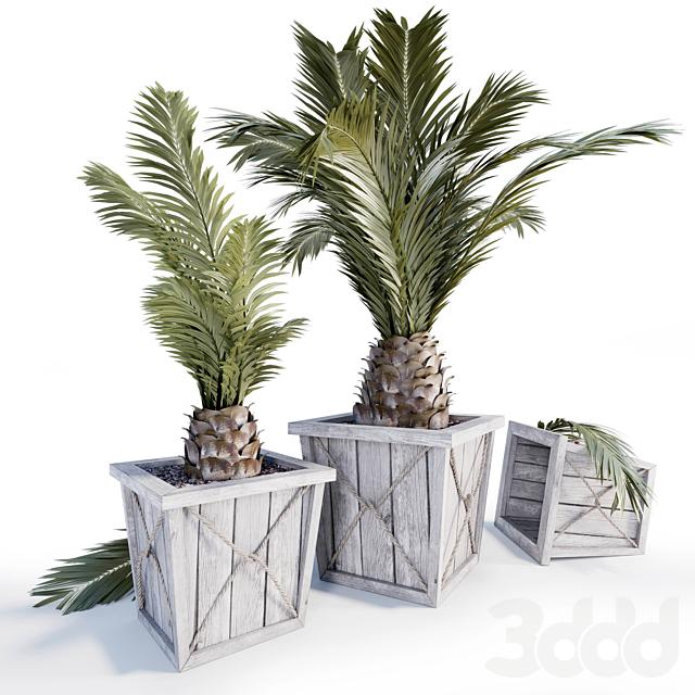 Palm_001