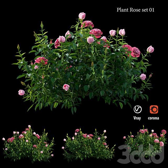 Plant rose set 01