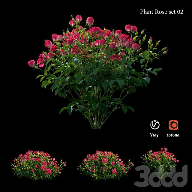 Plant rose set 02
